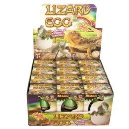 48 of Growing Pet Lizard Eggs