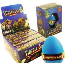 48 of Growing Pet Turtle Eggs