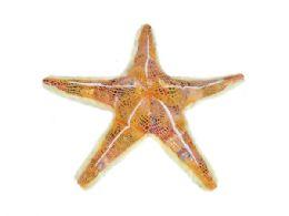 24 of Wild Republic Plush Orange Glitter Starfish