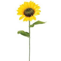 24 of Sunflower