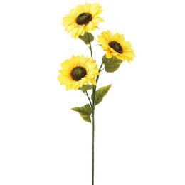 24 of Head Sunflowers