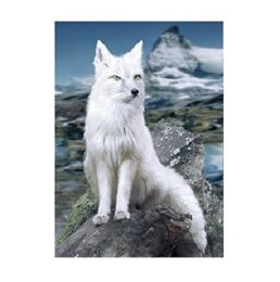 40 of 3D Picture White Fox