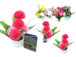 72 of Carnations In Pot 6 Head