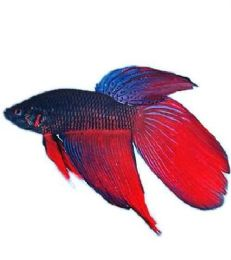 120 of Betta Food
