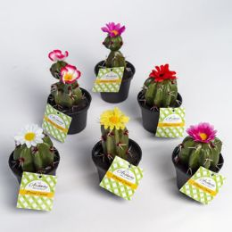 24 of Potted Cactus W/flower 6asst 5-6inh Lawn And Garden ht
